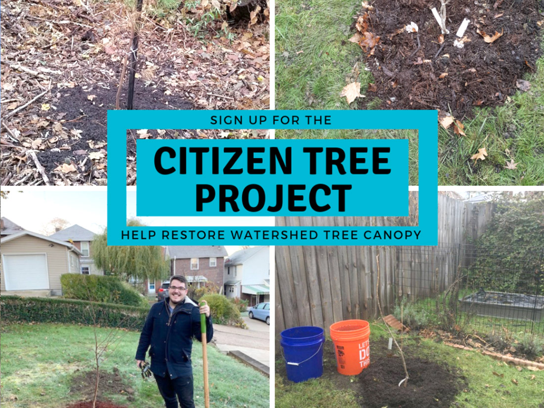 Citizen Tree Project