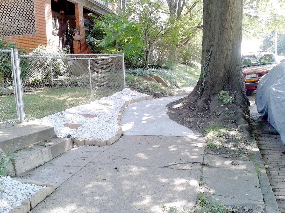large tree growing in sidewalk Pittsburgh PA
