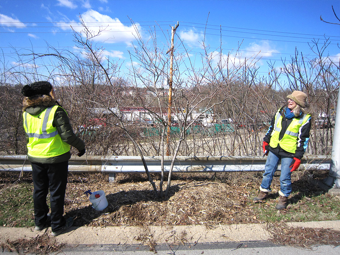 Planting a shade tree in Pittsburgh PA