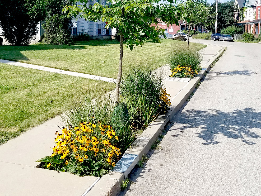 Stormwater tree pit in Pittsburgh PA