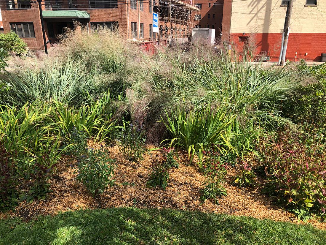 University Square rain garden Pittsburgh PA