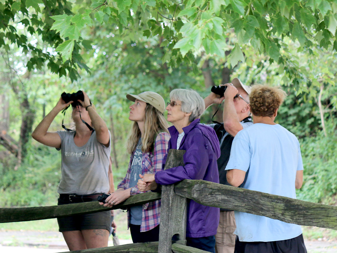 Group looking at trees in the city of Pittsburgh