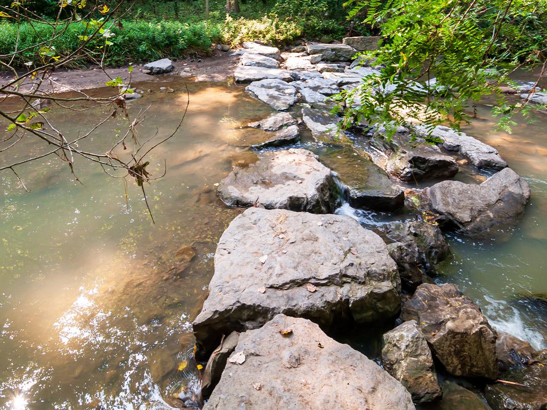 Dam in stream